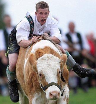 bull rider in lederhosen - germany